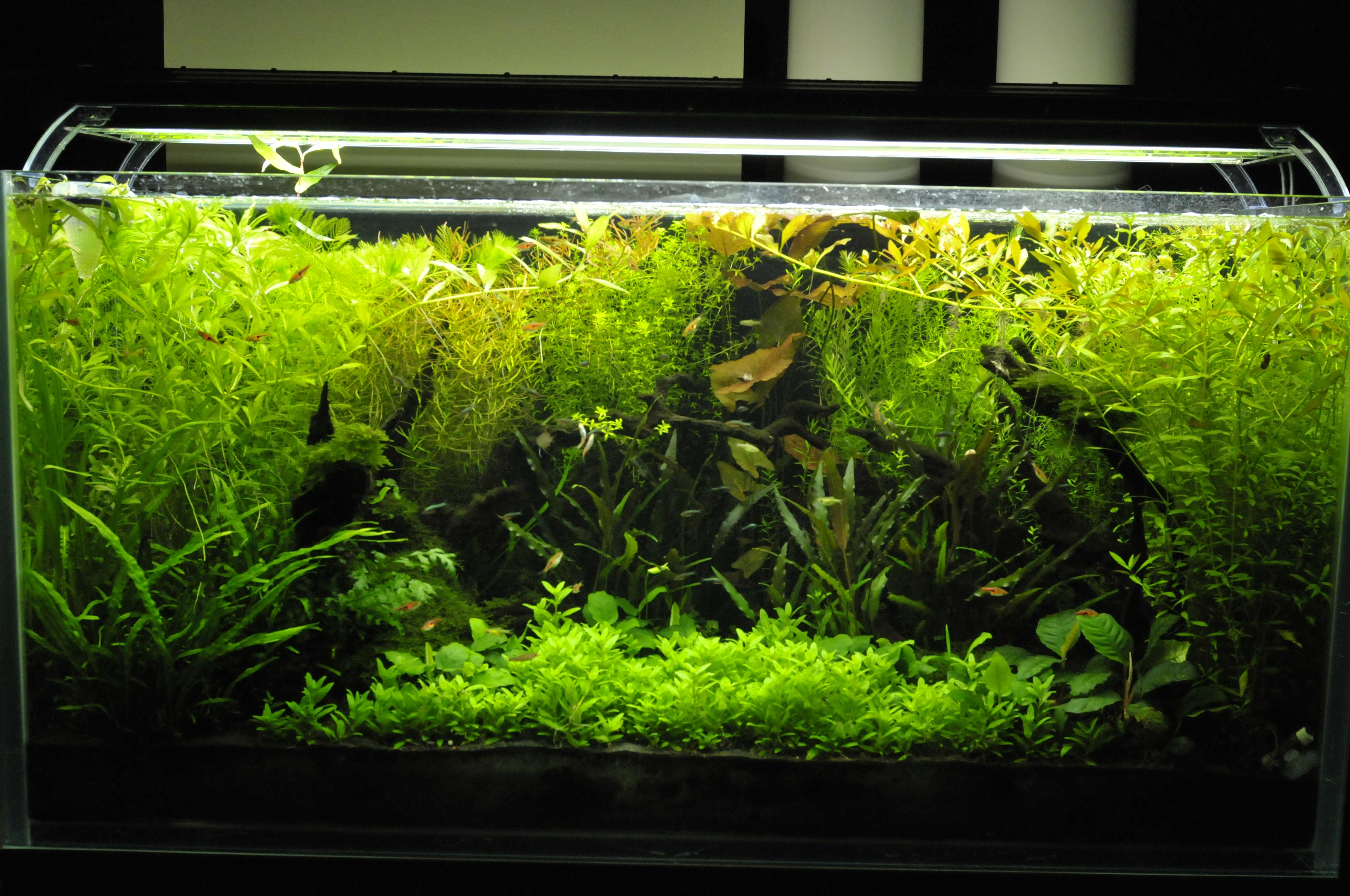 aquarium pflanzen d nger auf kohlenstoffbasis 250ml braunschweig. Black Bedroom Furniture Sets. Home Design Ideas